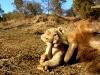 little_lion.jpg