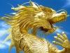 dragon23