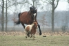 800px-horse-and-pony