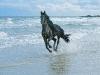 black_horse_and_sea_wallpaper-normal