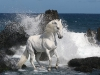 having_fun_in_at_the_ocean_foreshore