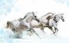 horse-desktop-wallpaper_1280x800_88702